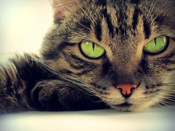 Pisicile isi exprima afectiunea intr-o maniera paradoxala