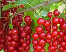 Jardina.eu: Fructele lunii iunie