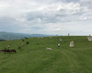 Plimbari in 4: O zi pe dealurile de la Naeni, Buzau